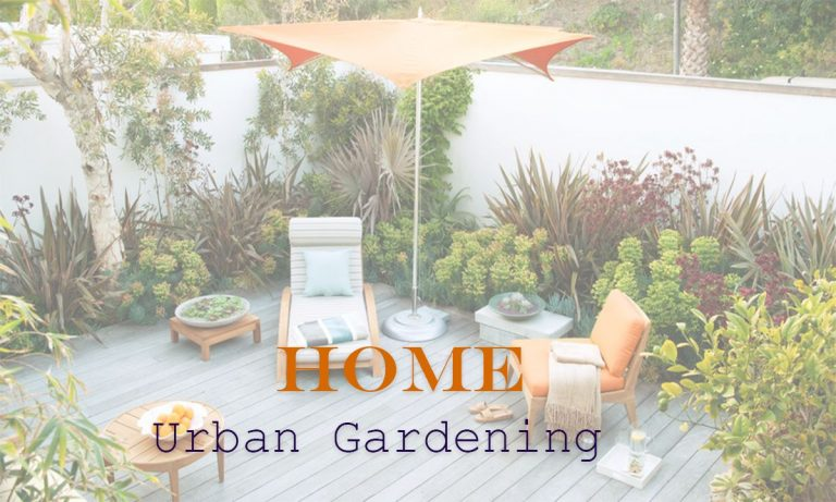 Beginners Guide for Urban Gardening at Home
